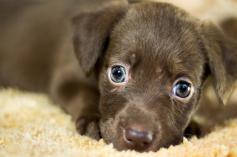 Adoption Chien Gratuit